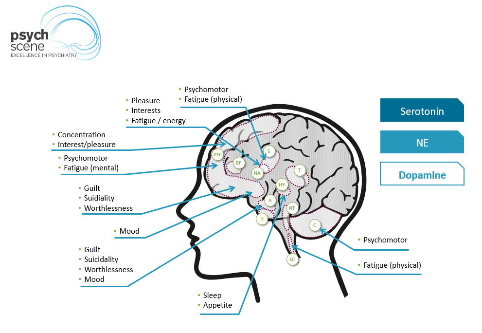 Executive dysfunction is localised in the Prefrontal cortex (PFC) and is regulated mainly by Dopamine (DA) and Noradrenaline (NA). Fatigue or loss of energy is linked to deficient functioning of DA and NA in the PFC.