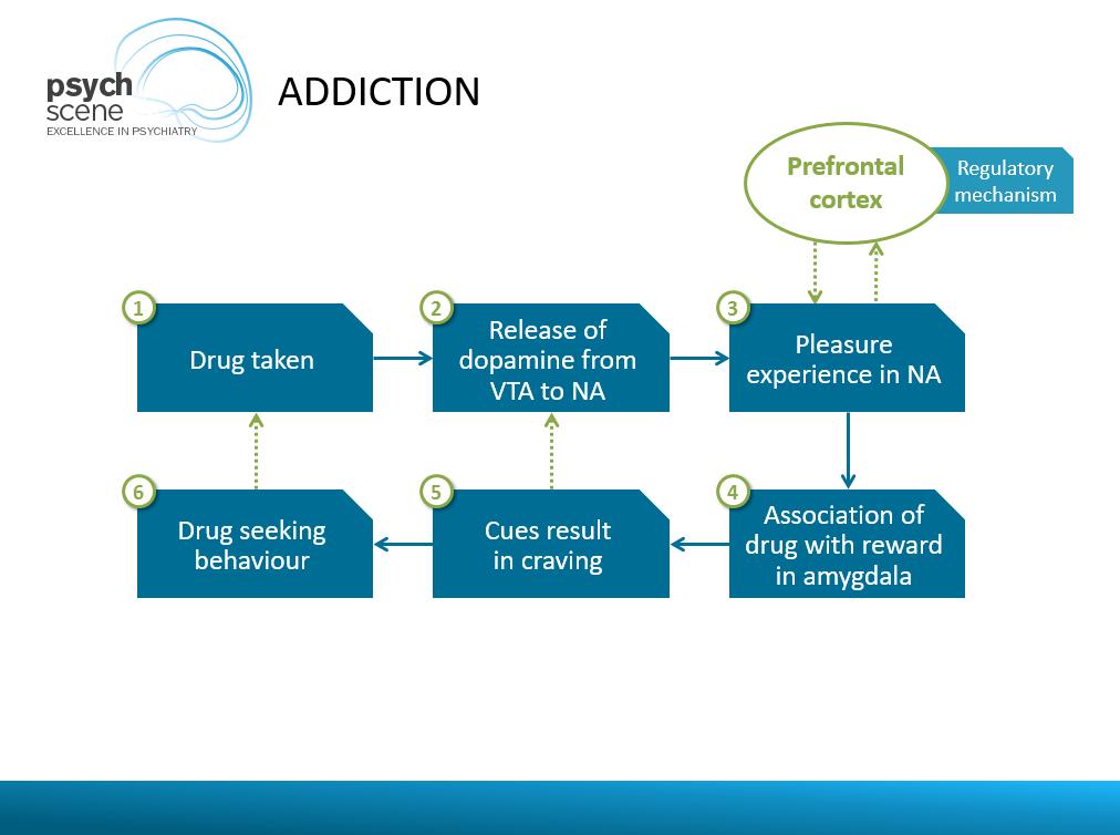 Addiction and prefrontal cortex