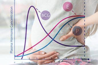 E = Estrogen; P = Progesterone; hCG = Human chorionic gonadotropin (hCG)