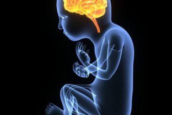 impact of maternal stress on fetal brain