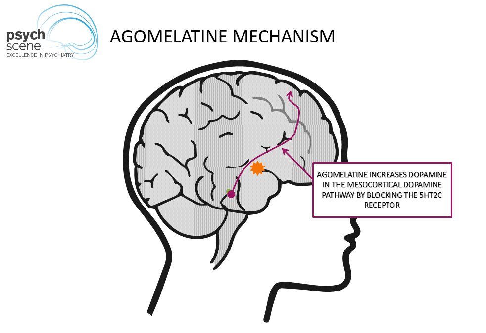 agomelatine-mechanism