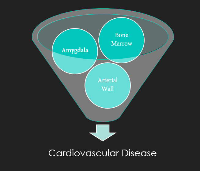 Amygdala and CVD