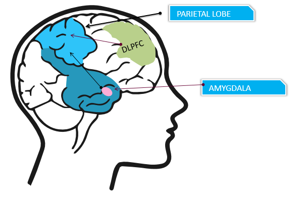 Greater connectivity between the dorsolateral prefrontal cortex and postcentral gyrus in the parietal lobe was associated with either full or partial remission from psychotic symptoms. Increased connectivity between the amygdala and the inferior parietal lobule was associated with reductions in affective symptoms when processing social threat symptoms