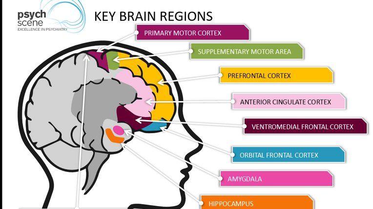 The Amazing Brain Changes In Pregnancy Preparation For Motherhood