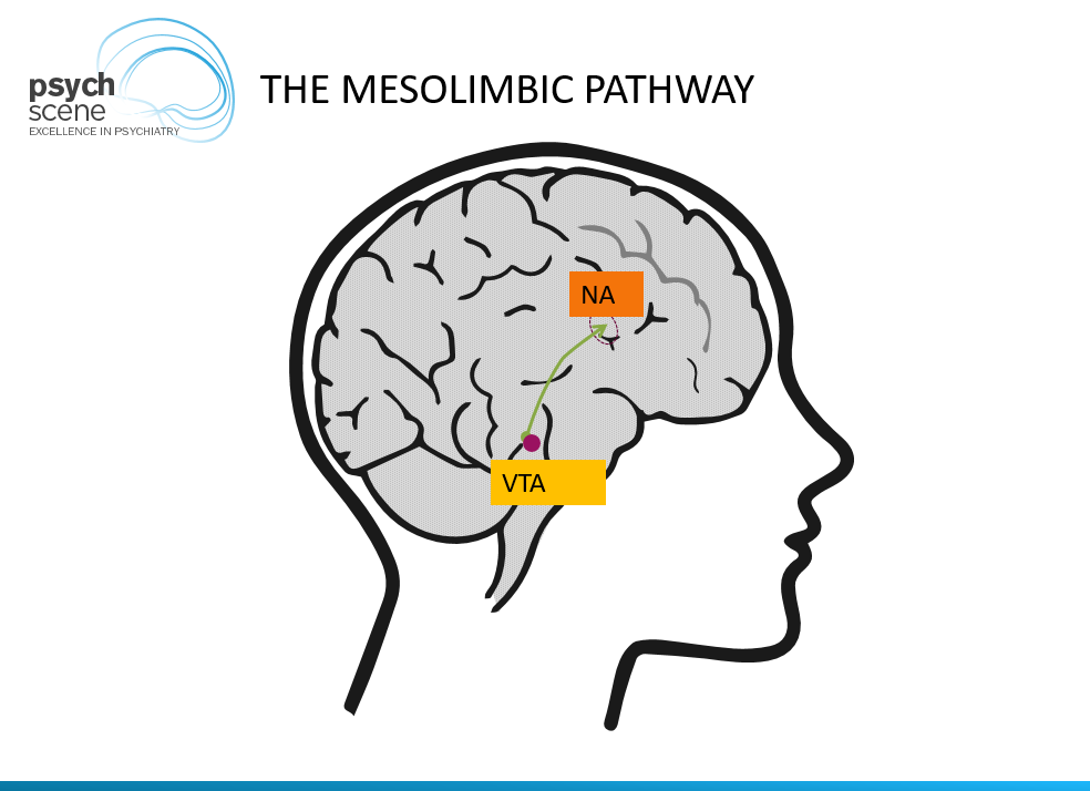 Dopamine is the major neurotransmitter involved as part of the mesolimbic system projecting from the Ventral tegmental area (VTA) to the Nucleus accumbens (NA)