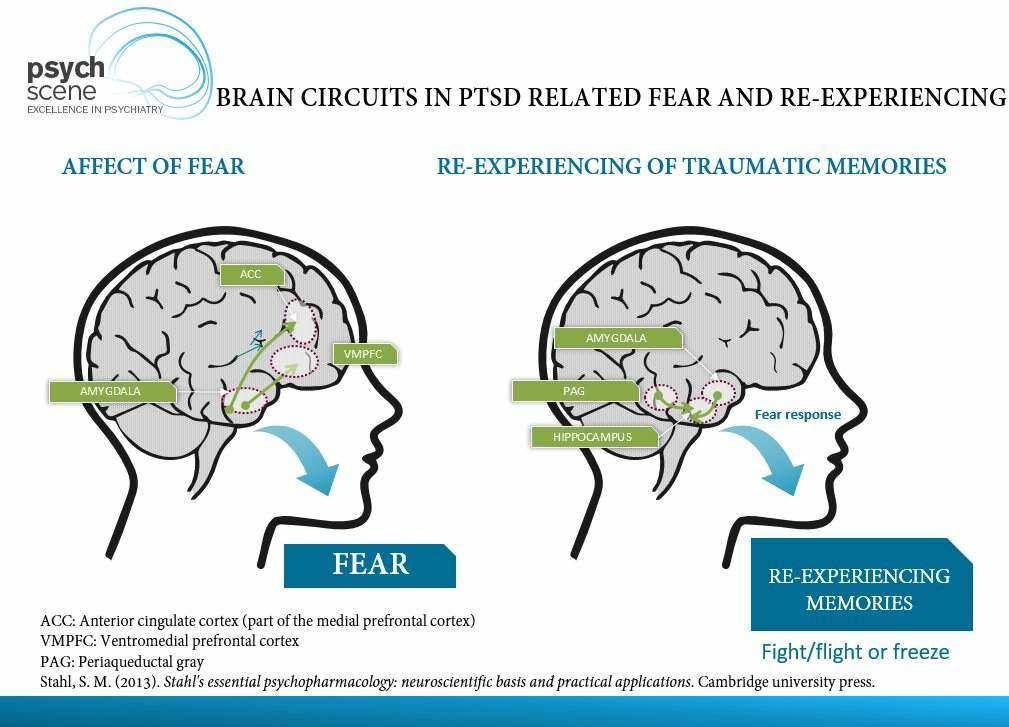 Amygdala in PTSD
