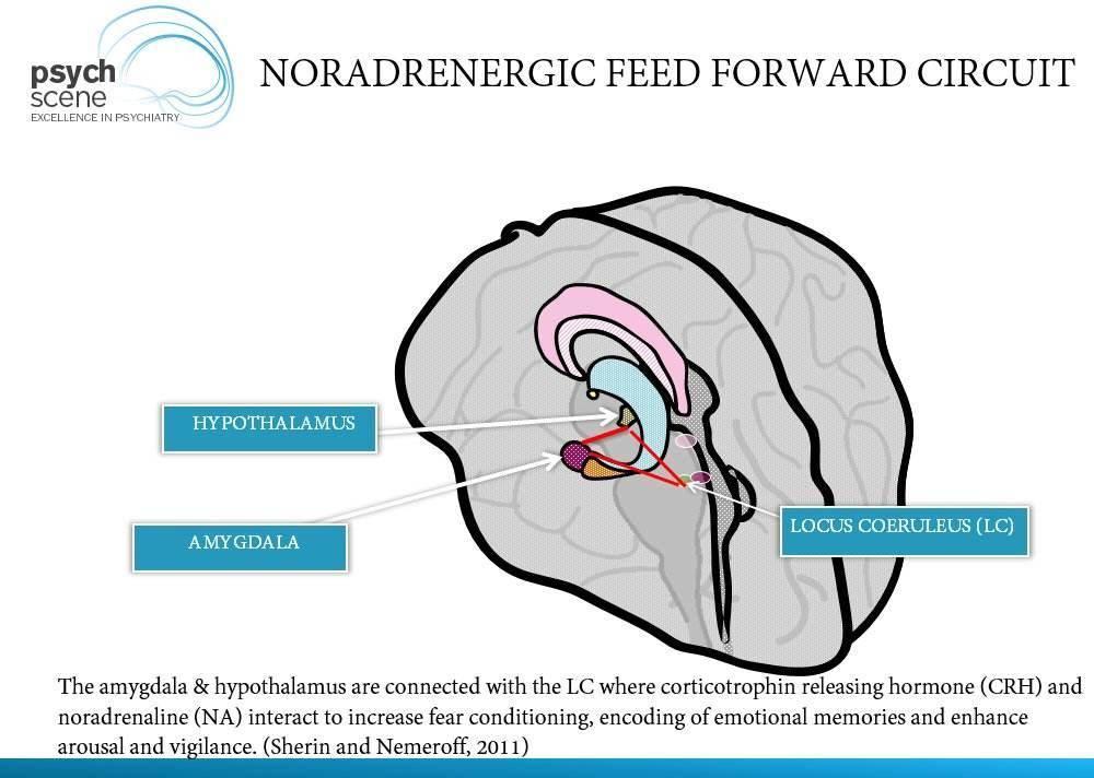 Noradrenergic feedforward circuit in PTSD