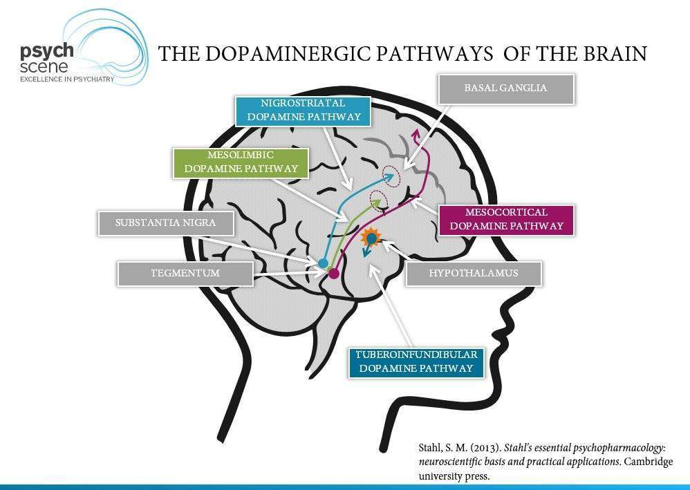 The Dopamine Hypothesis Of Schizophrenia Advances In Neurobiology