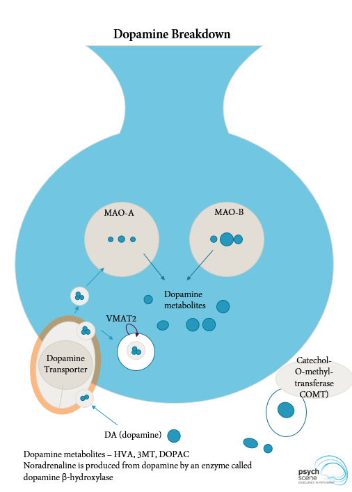 The Dopamine Hypothesis of Schizophrenia - Advances in