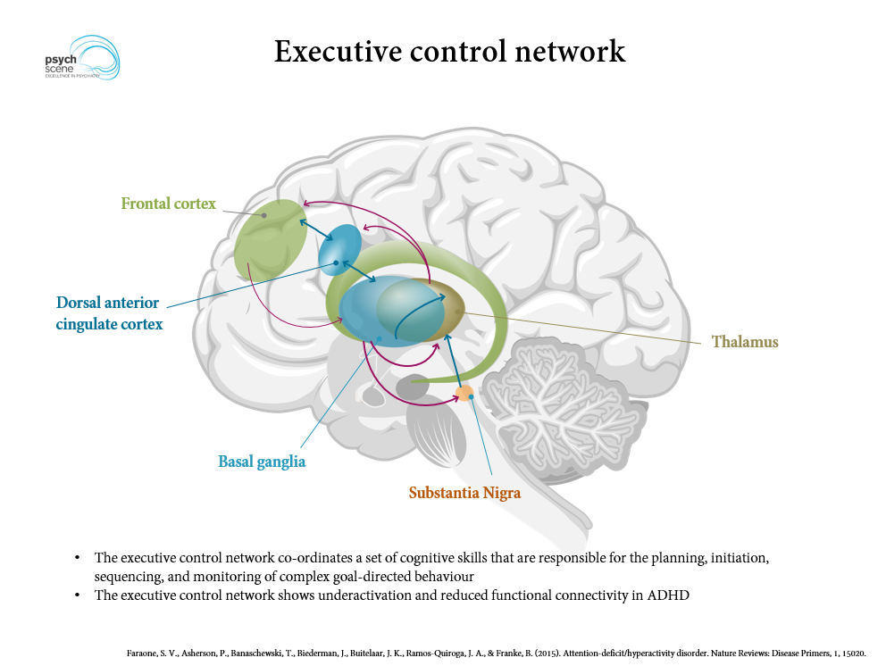 Adhd Neurology Brain Of Inattention   Best Upcoming Cars Reviews